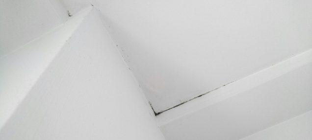 壁紙のカビ
